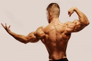 7 bước cơ đồng hóa cơ bắp